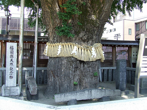 4 800-Year-Old Tree