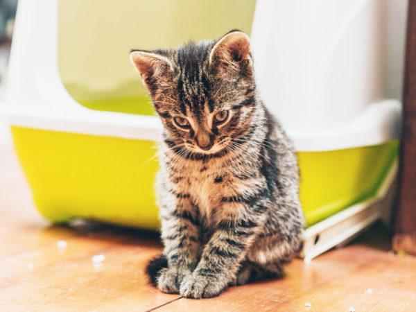 kitty litter dangerous