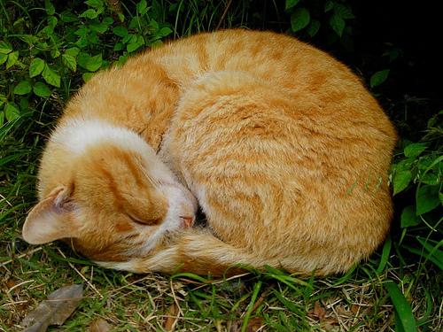 Peaceful Cat