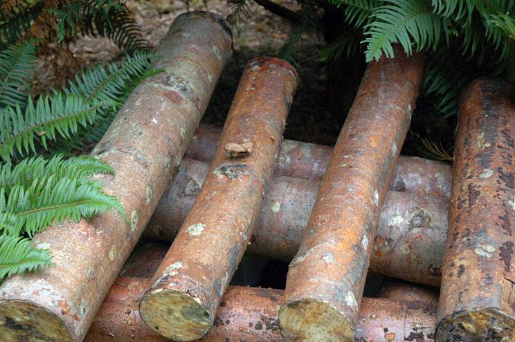 10 Alder Logs