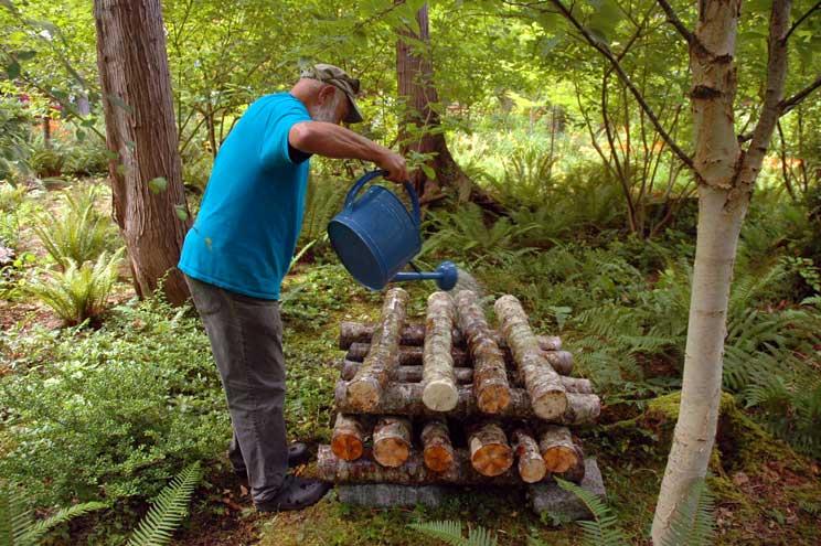 8 Watering Alder Logs