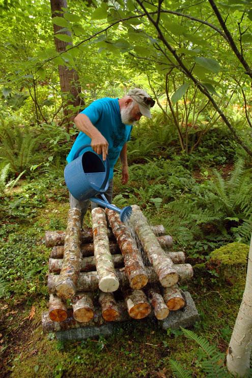 9 Watering Alder Logs 2
