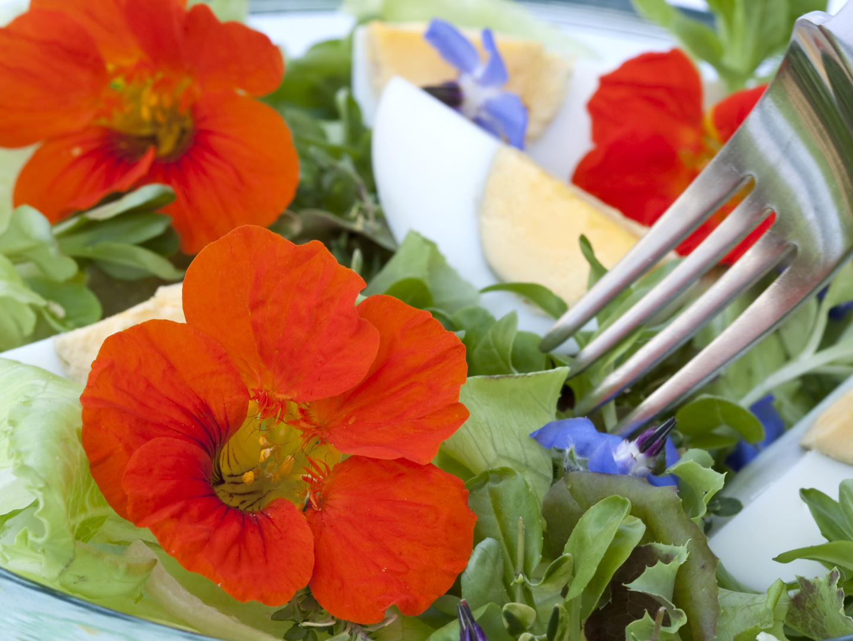 Fotos de flores de floriculturas 74