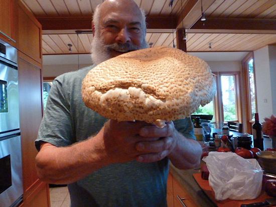 Agaricus augustus mushroom