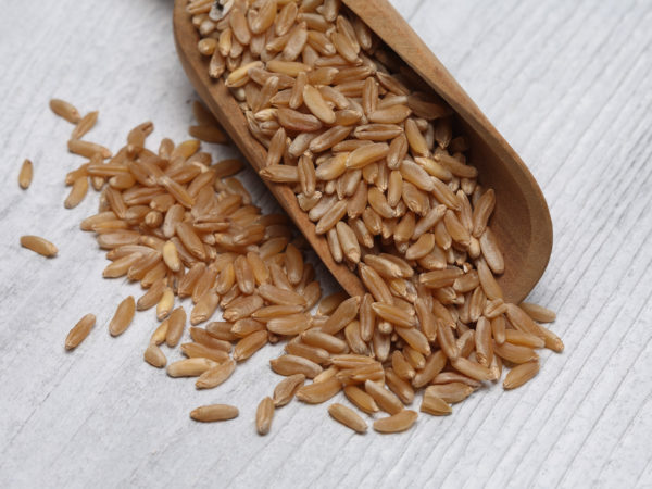 Ancient grain kamut, Khorasan wheat, Triticum turgidum ? polonicum