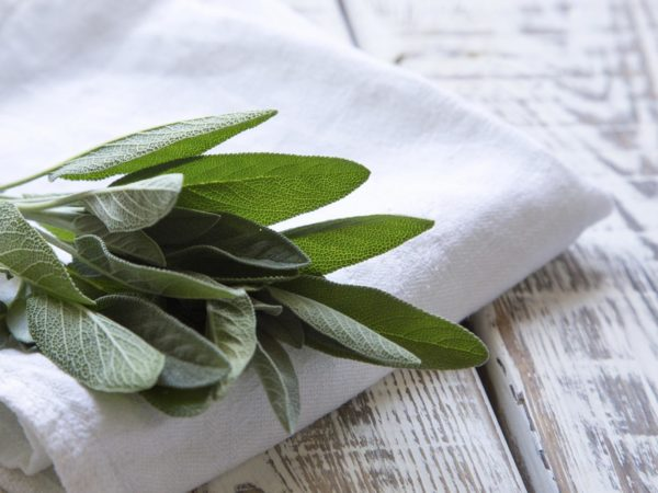 Cooking With Spices: Sage | Dr. Weil's Healthy Kitchen