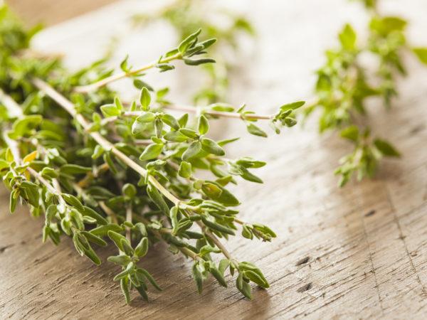 Raw Organic Green Thyme in a Bunch