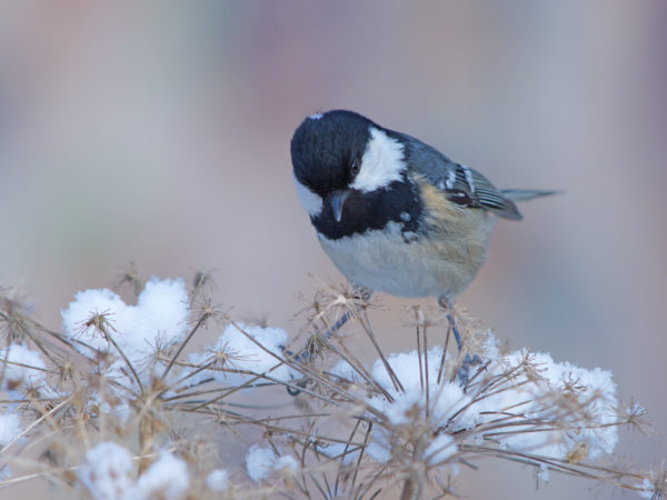 Bird balanced on branch in winter.