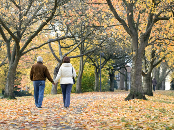 Rear view of loving senior couple holding hands walking in park under tree canopy in autumn.