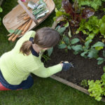 Overhead, outdoors shot of a lady wearing red wellington boots and lime green top, kneeling down on green grass, weeding a raised bed in a vegetable garden. She has a garden trug containing garden tools and vegetable seeds by her side.