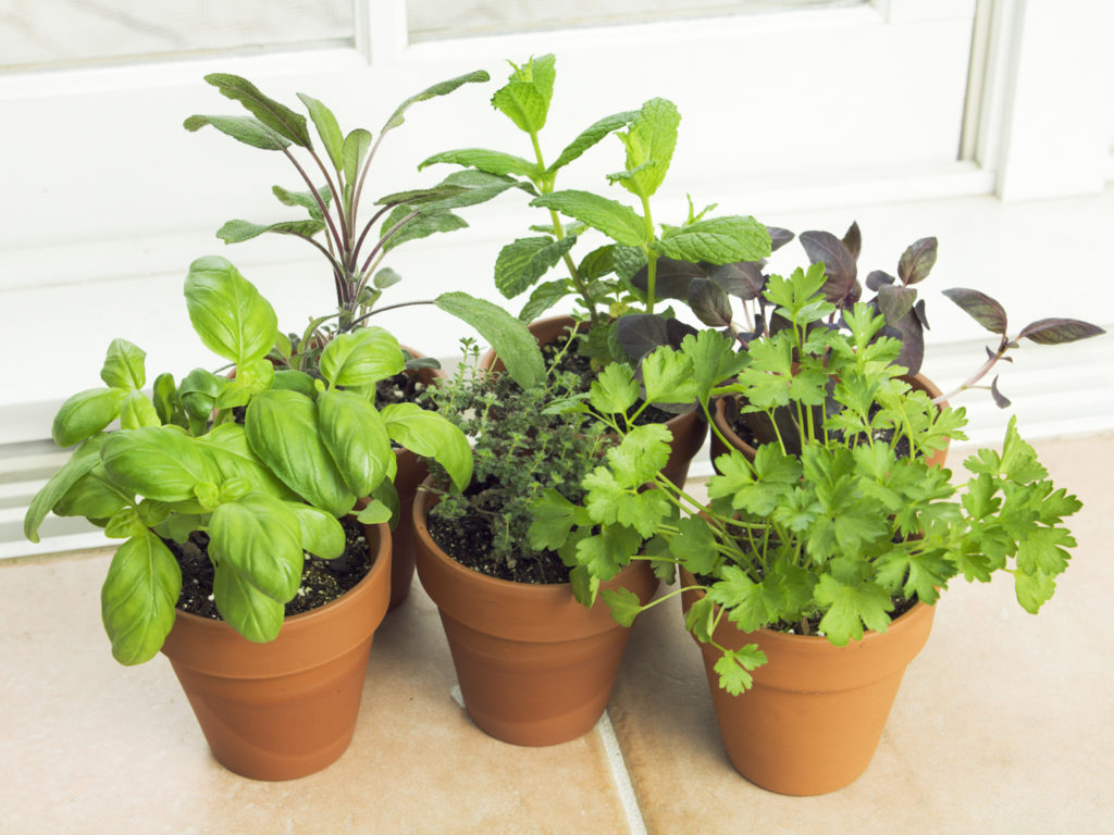 Subject A Potted Herb Garden With