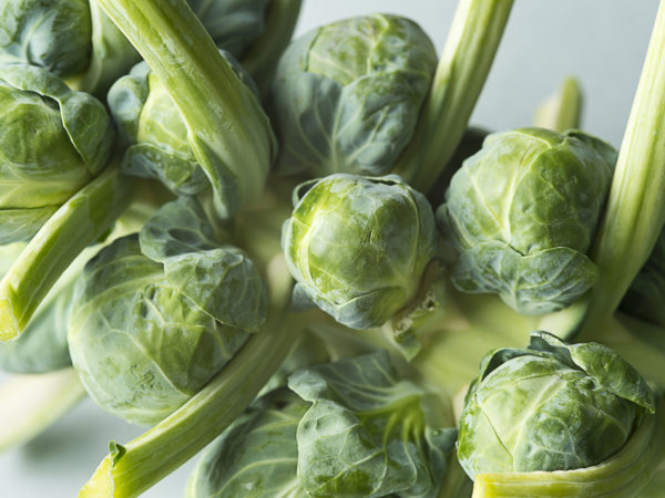 Fresh Brussels Sprouts on the stalk