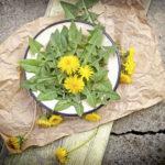 Edible dandelion leaves