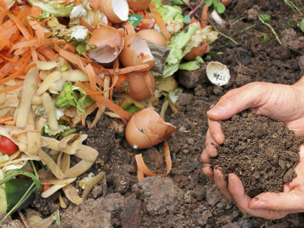 Hands Are Holding Composted ...