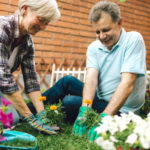 Senior Cheerful Couple planting a flower in a back or front yard together. They are happy to spending time together.