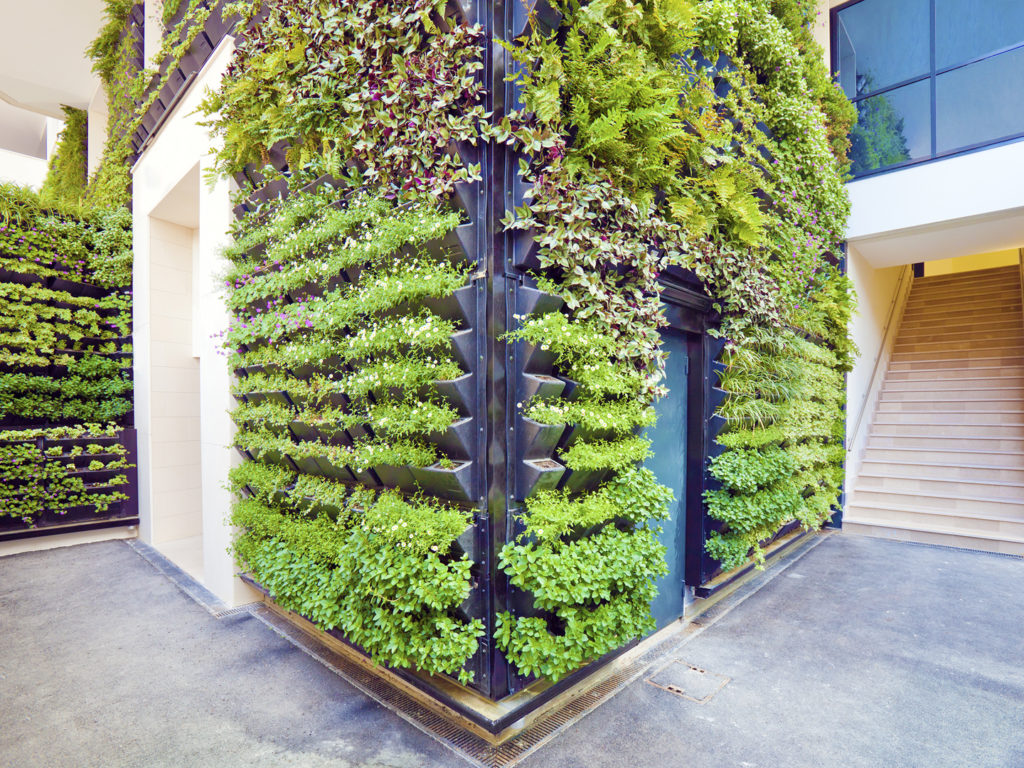 Wall of a building covered with plants to make a living wall.