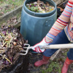 """Woman gardener using garden fork to first remove uncomposted food waste from top of composting bin pile, before spreading the compost below onto a vegetable garden."""