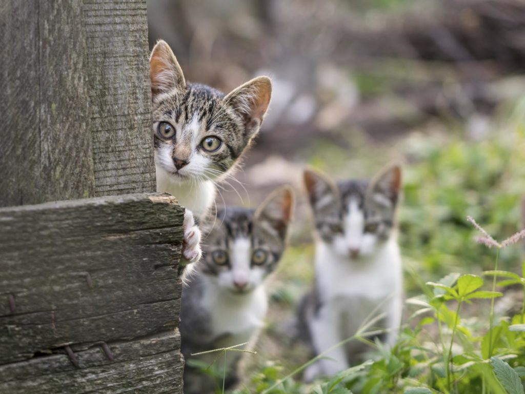 Curious But Shy Kittens