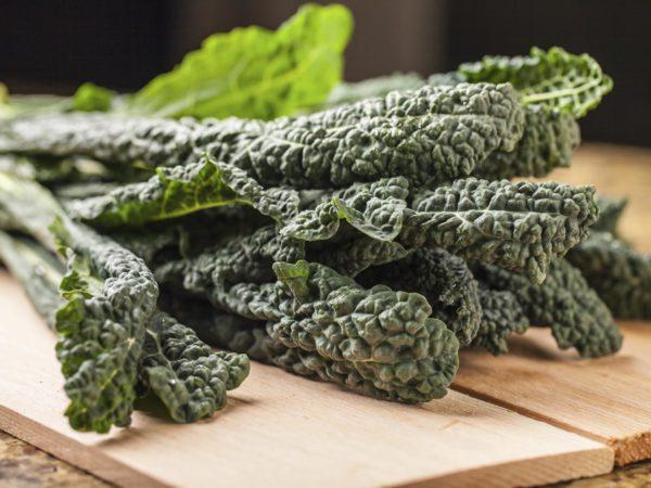 Bunch of freshly harvested lacinato kale with studio lighting