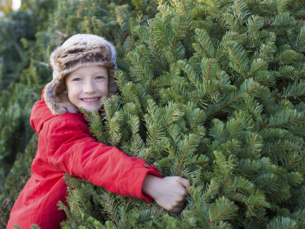 happy child holding christmas tree at christmas market at cold winter
