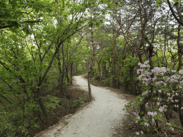 Footpath at a lush forest at the Bukhansan National Park in Seoul, South Korea.