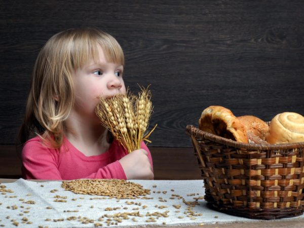 Child grain oats and wheat. Ears of wheat in the bread basket