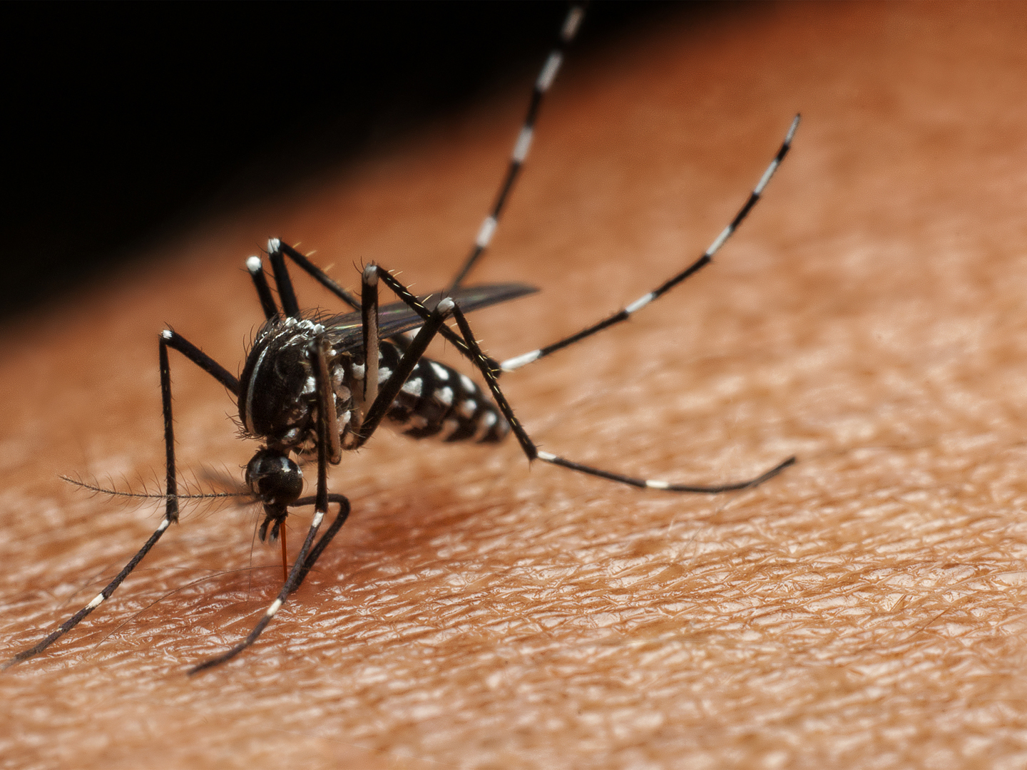 Do Mosquitoes Love You? - Ask Dr. Weil