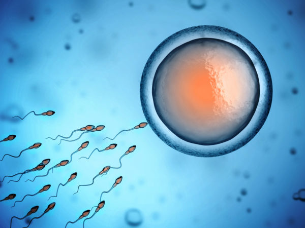 human sperm and egg cell 3d illustration