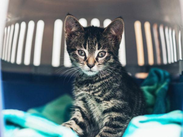在小可爱的眼睛里,盯着可爱的眼睛,盯着一个可爱的毯子,盯着猫的眼睛看着小眼睛