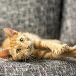 cat scratch fever threat