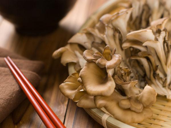 mushrooms against cancer