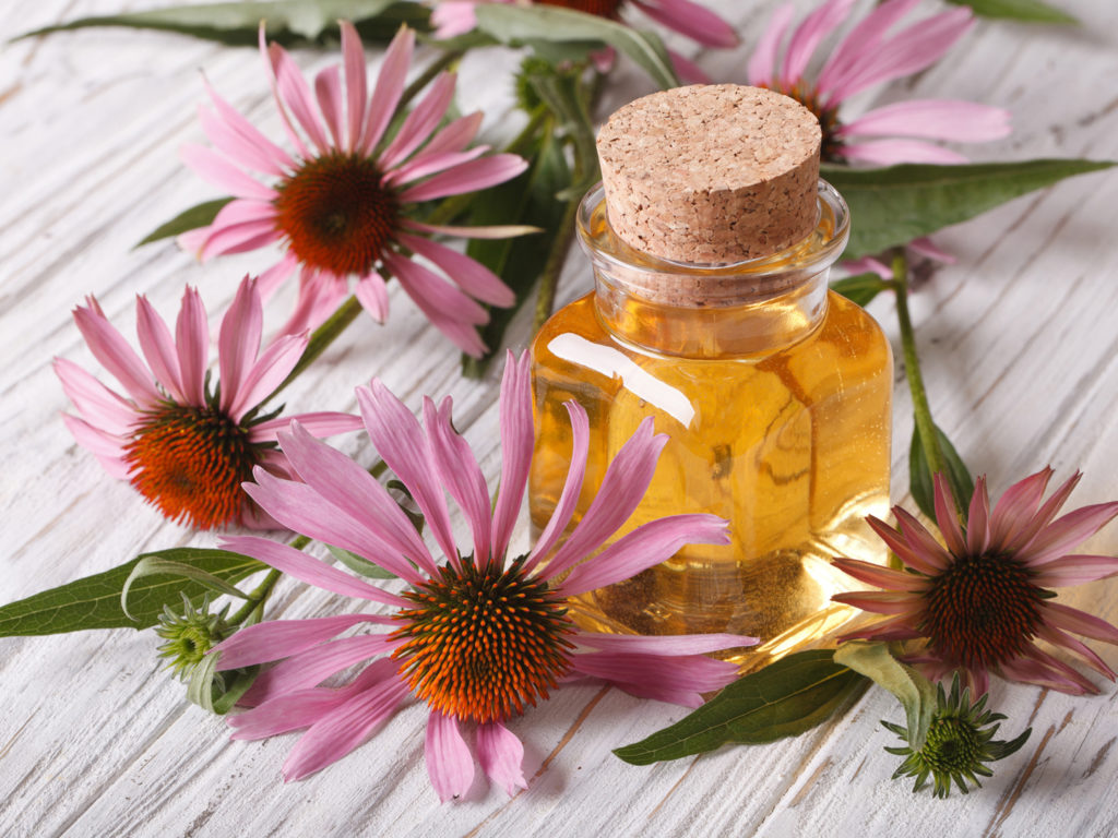 herbal medicine echinacea and kava essay