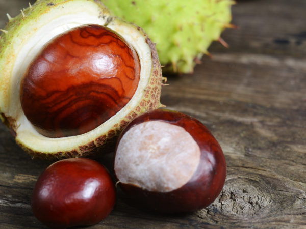 Fresh chestnuts on a rustic wooden table. Autumn concept background with space for text