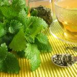 Lemon Balm and Lemon Balm Tea