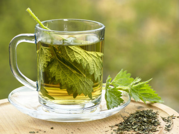 Stinging Nettle | Herbal Remedies | Andrew Weil, M D