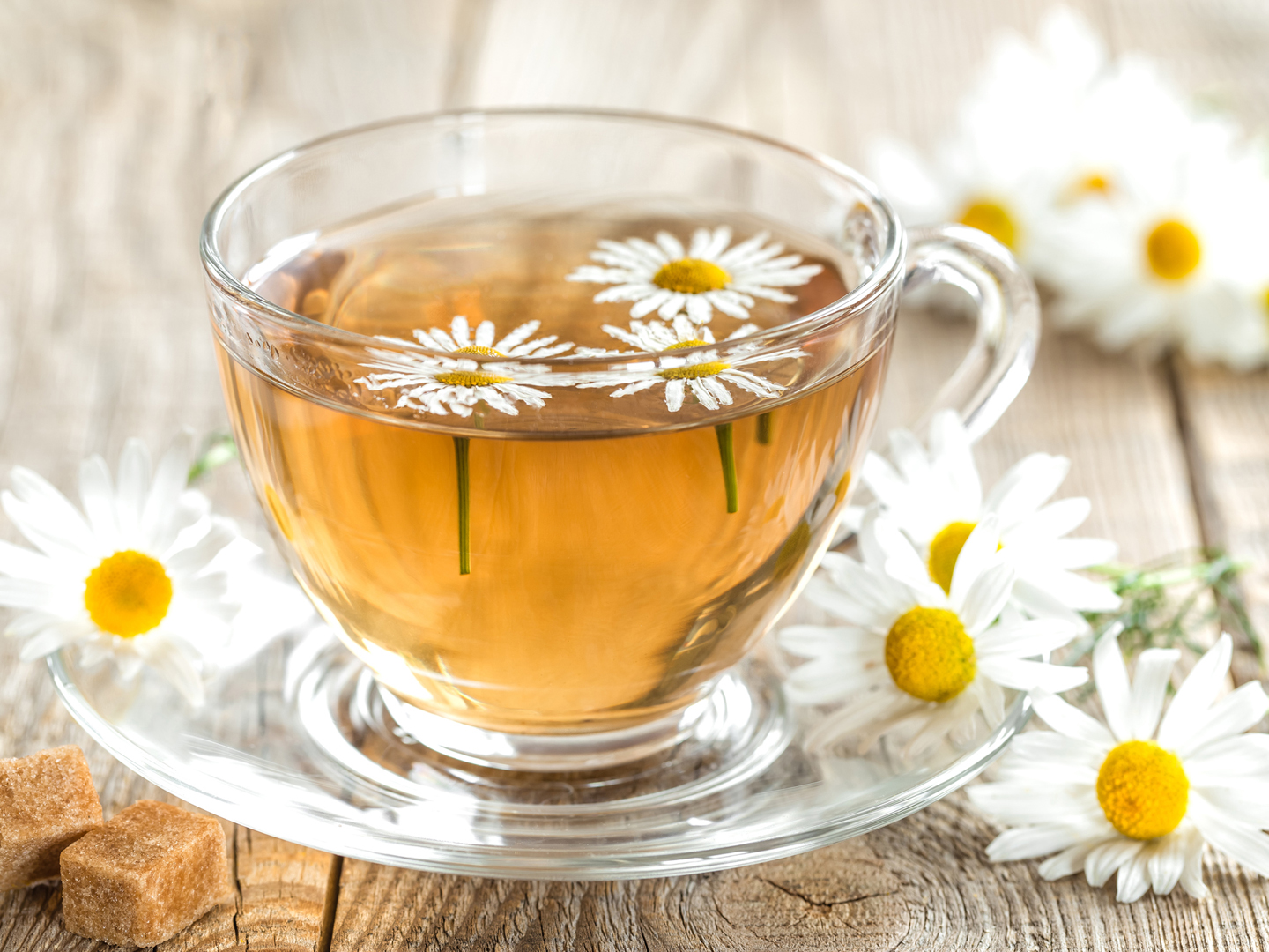 Chamomile - Uses, Interactions, Safety Concers and Doses ...