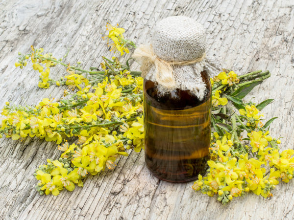 Mullein, also known as velvet plant (Verbascum) and pharmaceutical bottle on old wooden table. The plant is highly valued in herbal medicine, it is used in the form of infusions, decoctions, ointments, oils
