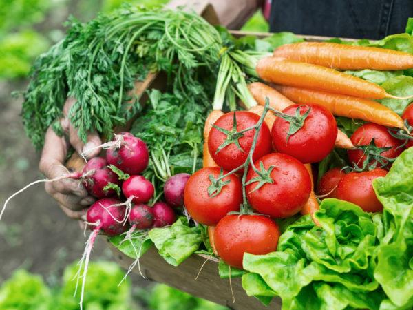 Vegetables | Copper | Supplements & Remedies | Andrew Weil, M.D.