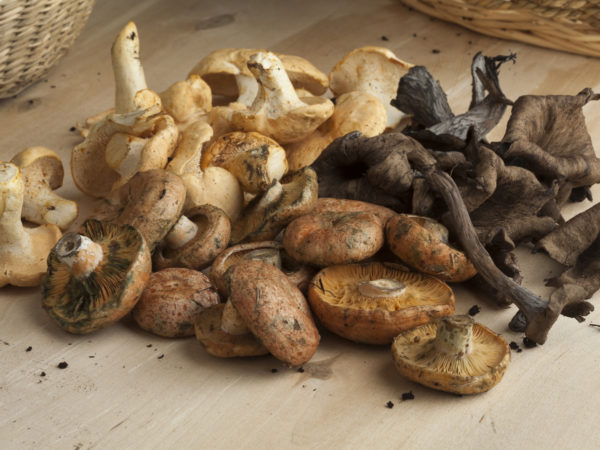 Variety of fresh picked wild mushrooms