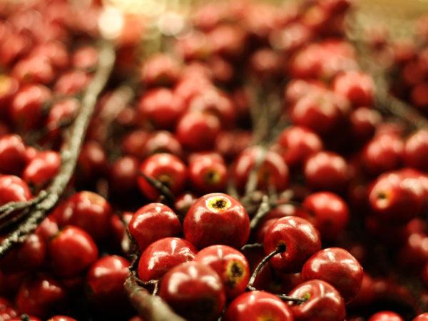 some holiday cherries.  DOF