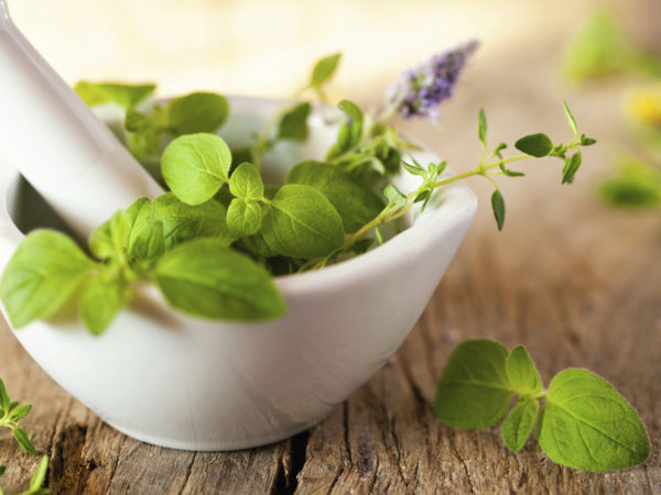 Can An Herb Help Prevent Memory Loss? Learn More