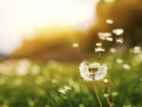 4 Ideas For Your Seasonal Allergy Checklist | Andrew Weil, M.D.