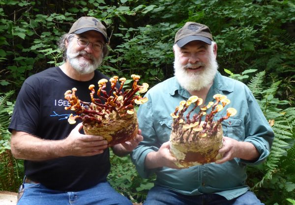 My Life With Mushrooms, Part Two | Andrew Weil, M.D.
