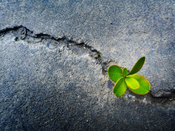Achieving Resilience And Accepting Change - plant growing in the pavement