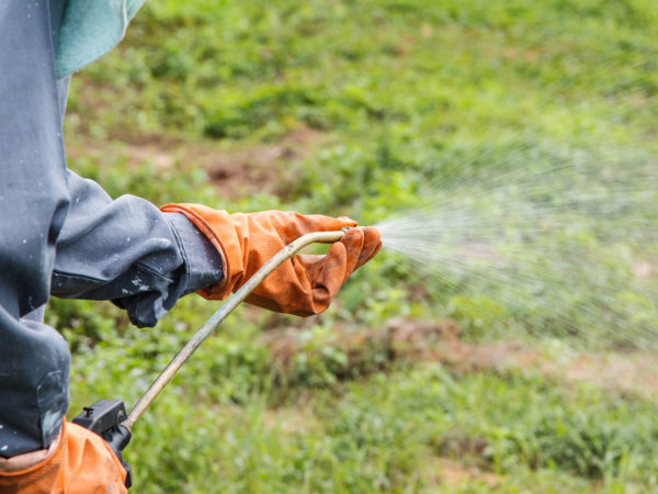 glyphosate weed killer danger