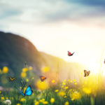 The Legacy of Color: Mountain meadow with butterflies.