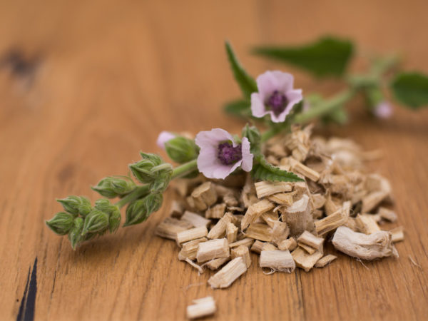 Marshmallow Root Benefits? | Herbs & Remedies | Andrew Weil, M.D.