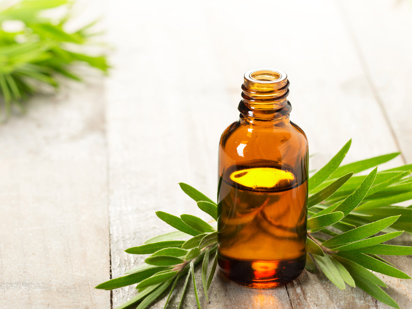 Do You Use Tea Tree Oil? Some Reasons You May Want To