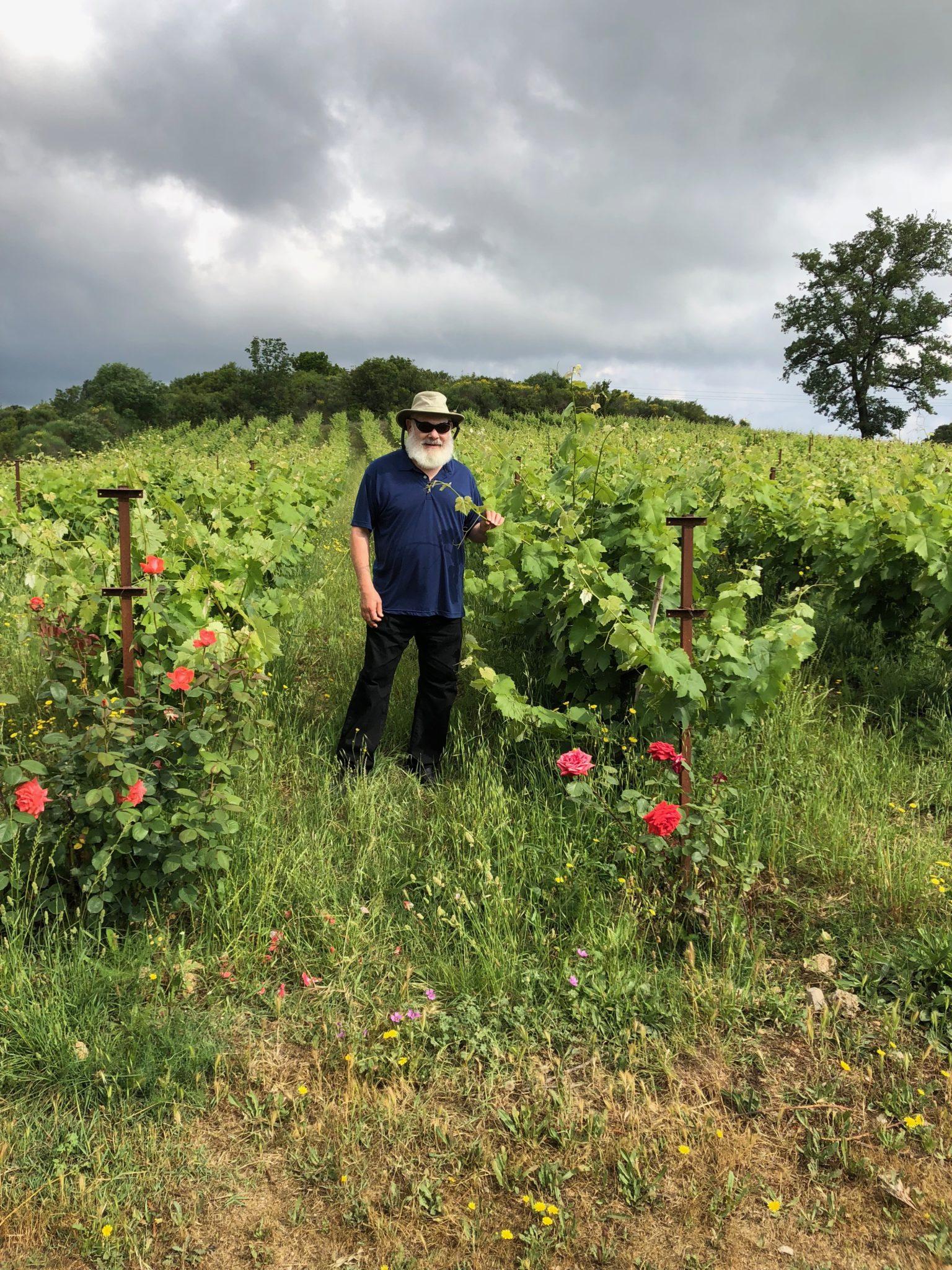 Vineyard in Corfu, Greece