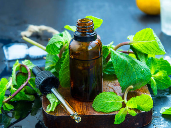 Peppermint Oil | Guide To Essential Oils | Andrew Weil, M.D